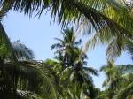 palm tree views