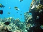banggi reefs